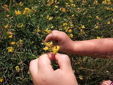 foto con mani di bambino